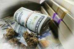 Medicinska stora vinster för marijuana` s stänger sig upp högkvalitativt Arkivbild