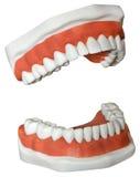 Medicinska tandproteser Arkivfoton