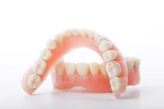 Medicinska tandproteskäkar Arkivfoton