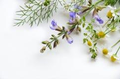 Medicinska växt- blommor arkivbild