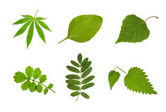 medicinska växter Royaltyfri Foto