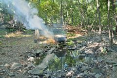 Medicinskt bad i skog 6 Arkivfoton