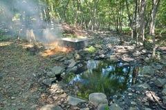 Medicinskt bad i skog 11 fotografering för bildbyråer