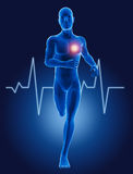 medicinskt spring för man 3D med ECG Royaltyfri Bild