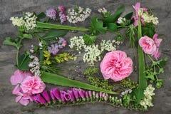Medicnal örter och blommor Royaltyfria Bilder