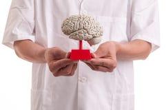 Medico con il modello del cervello in sue mani Immagini Stock Libere da Diritti