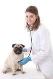Medico del veterinario della giovane donna che controlla cane con lo stetoscopio isolato sopra Immagine Stock
