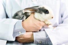 Medico del veterinario e del coniglio sul lavoro in clini del veterinario Immagine Stock