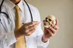 Medico dimostra la biologia dal modello del cranio Immagini Stock