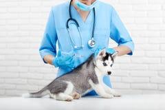 Medico femminile nel preoccuparsi blu per il cane del husky in clinica immagini stock libere da diritti