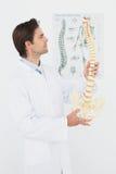 Medico maschio serio che esamina modello di scheletro Fotografie Stock Libere da Diritti