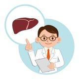 Medico per una descrizione del fegato Fotografie Stock Libere da Diritti