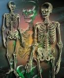 Medico - scheletro umano Fotografia Stock Libera da Diritti