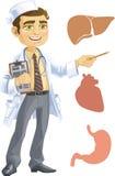 Medico sveglio - indicando che il fegato, cuore, s illustrazione vettoriale