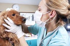 Medico veterinario immagine stock