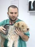 Medico veterinario Fotografia Stock