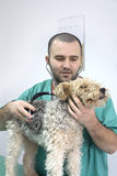 Medico veterinario Immagine Stock Libera da Diritti