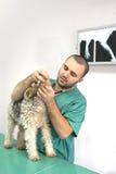 Medico veterinario Fotografie Stock Libere da Diritti