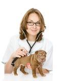 Medico veterinario che fa un controllo di un cucciolo di cane di sharpei. Immagine Stock