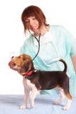 Medico veterinario e un cucciolo del cane da lepre fotografie stock libere da diritti