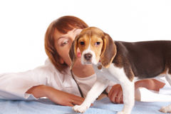 Medico veterinario e un cucciolo del cane da lepre immagine stock