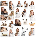 Medico veterinario Immagine Stock