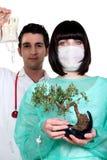 Medics with a bonsai tree Royalty Free Stock Photos