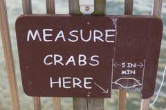 A medida crabs aqui o sinal Fotografia de Stock