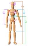 Medida do corpo do alfaiate, circuitos. Roupa do tamanho, perda de peso Foto de Stock Royalty Free