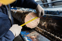 a medida o diâmetro da árvore Fotografia de Stock Royalty Free