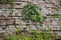 Medieval brick walls Stock Photos