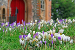 Medieval castle and crocuses Royalty Free Stock Image