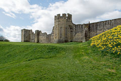 Medieval castle on a hill of green grass. Ancient castle and grounds in England with roaming green grounds Stock Images