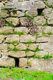 Medieval castle wall detail Stock Image