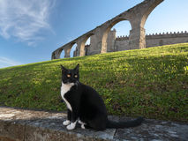 Medieval cat royalty free stock photo