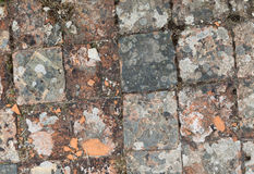 Medieval floor tile Royalty Free Stock Photos