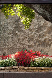 Medieval garden Stock Images