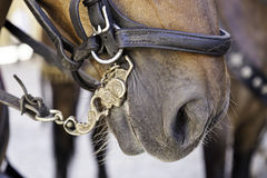 Medieval horse head Royalty Free Stock Photography