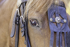 Medieval horse head Stock Photography