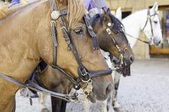 Medieval horse head Stock Photo