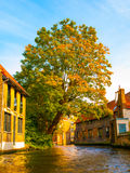 Medieval houses along canals of Bruges in autumn Stock Images
