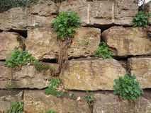 Medieval rough stone retaining wall Stock Image