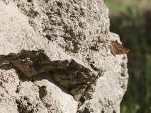 Medieval stone wall. Horizontal detail of medieval stone wall with butterfly Stock Photos