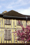 Medieval tenement and flowering almond tree. In Troyes, France Stock Photo