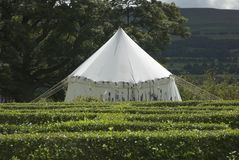 Medieval Tent Stock Images