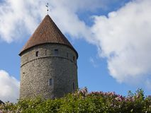 Medieval tower, part of the city wall, and the blossoming lilac Stock Image