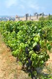 Medieval town of Carcassonne and vineyards Royalty Free Stock Photos
