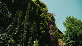 Medieval triangular house, all overgrown with ivy. Old part of Rome, Italy stock video footage