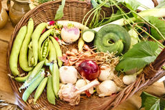 Medieval vegetables. Basket with medieval vegetables in Guedelon, Treigny, France Royalty Free Stock Images