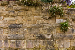 Medieval  wall. On a medieval wall have increased some bundles of flowers Stock Photography